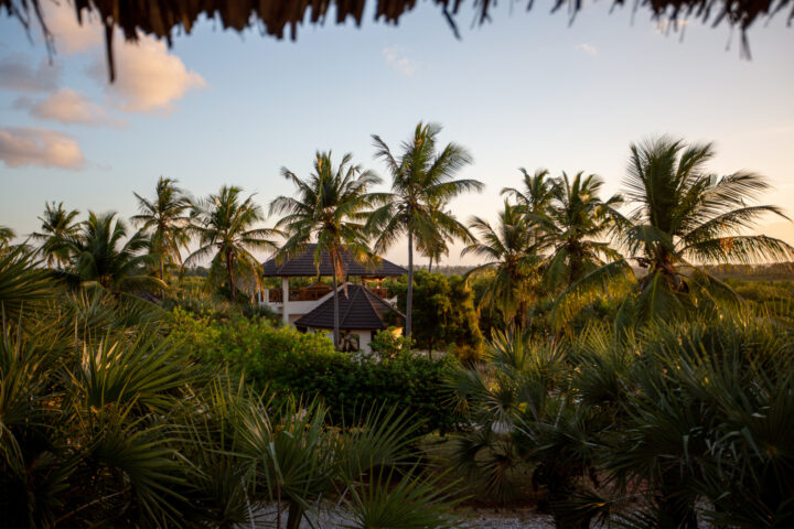 Sunset with clear skies, with palms and lush green vegetation, and one of the buildings visible among it